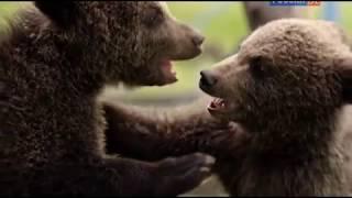 Животные мира Карпаты История сказка Пара медвежат Голодные малыши Чудо спасение Дуга гор