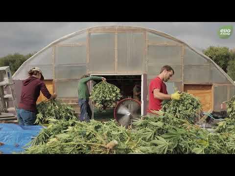 Hemp Farmers Grow America: Regenerative Hemp