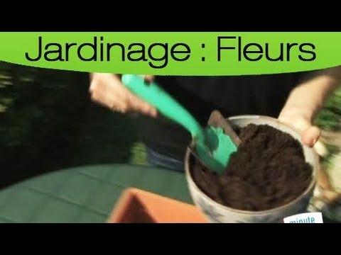 comment bien planter des graines en pot