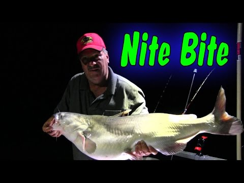 Live Bait vs Cut Bait Night Fishing For Flathead Catfish from YouTube · High Definition · Duration:  30 minutes 4 seconds  · 22,000+ views · uploaded on 7/16/2016 · uploaded by muddyrivercatfishing