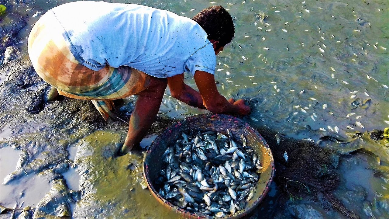 Unbelievable fish catching in mud water pond by hand for People catching fish