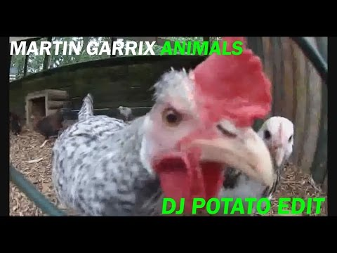 Martin Garrix - Animals (DJ Potato Edit)