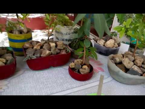 21 Creative gardening ideas with Re use of waste material (part 1) (Hindi/Urdu ) 7/5/16