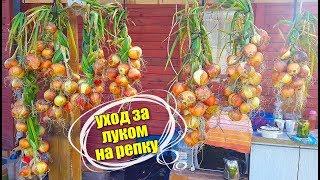 РЕПЧАТЫЙ ЛУК. Уход, Полив, Подкормка, Мульча!! Секреты хорошего урожая. Личный опыт