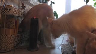 Кошка хочет копать.Cat wants to dig.