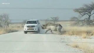★ Accidental Safari ||  Especial embestidas