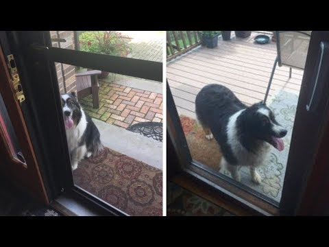 When A Family Saw This Strange Dog Barking At The Door, They Soon Realized The Reason He Was There