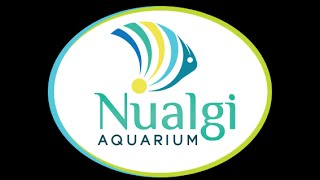 Nualgi, What it does and Where it can Take Your Aquarium.
