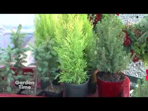 A&R Living Christmas Trees