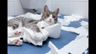 😅🐱Funny Cats Vs Toilet Paper Compilation 2018   Funny Cat Clips😅🐱
