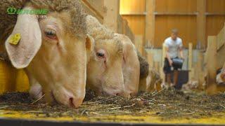 Roman Berger: Wenn aus Schafwolle eine runde Sache wird