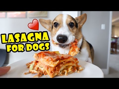 CORGI Trying Homemade Lasagna (Dog-Friendly Gourmet) || Life After College: Ep. 652