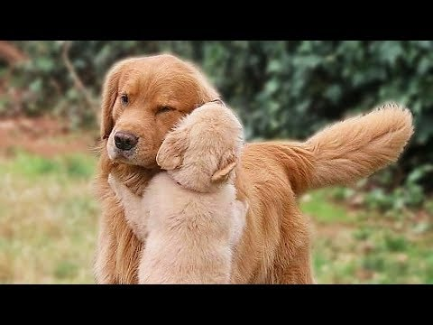 Big Dog and Cute Puppy Compilation NEW
