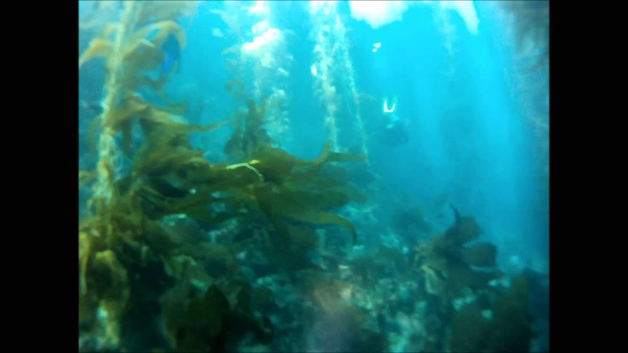 Scuba diving casino point