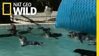 Penguin Resort | Penguin Island