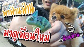 เดินเลือกสัตว์ที่จตุจักรครั้งแรก มีแต่สัตว์น่ารักๆ!! (ตามหาสมาชิกใหม่!?)