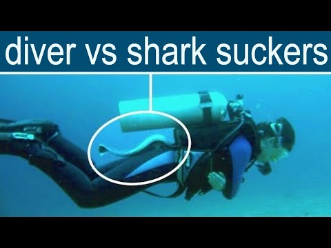 Scuba disturbed by live shark-ers while diving in tropical ocean