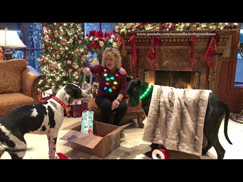 Great Dane Puppy And Cat Enjoy Christmas Chicken Gifts From Florida You Tube Friend