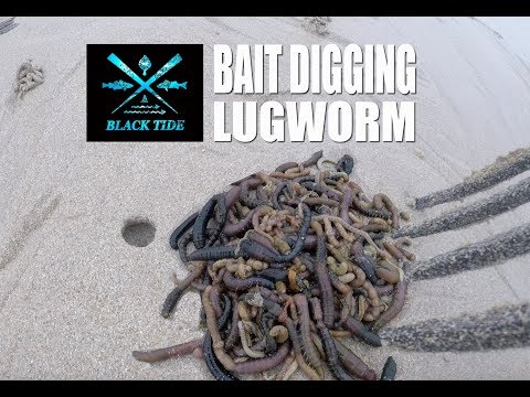 Black Tide Fishing: Bait Digging - Herm Island