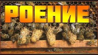 Роение пчел.Первые признаки