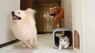 T-rex Dinosaur Suit Prank On Dog And Cat!!