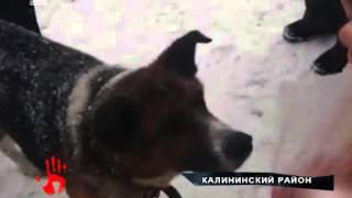 Собака неделю ждет хозяина на остановке общественного транспорта