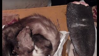 Двоих нелегальных охотников задержали сотрудники госинспекции. Зона Х