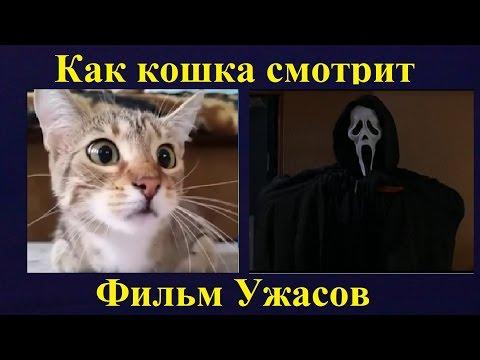 Как кошка смотрит фильм ужасов