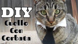 DIY Cuello con Corbata collar para gato