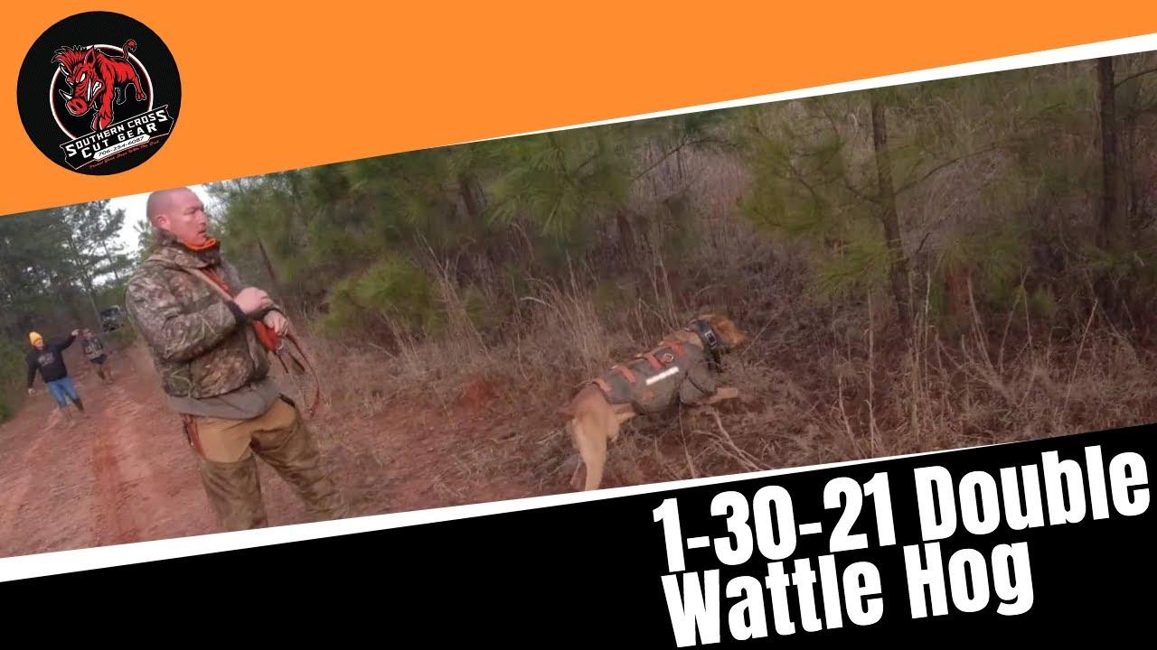 1-30-21 Double Wattle Hog