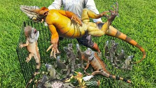 iguana-fishing-challenge-how-many-can-we-catch