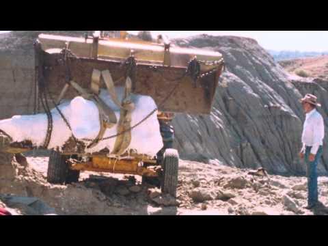 Dinosaur Fossils--Hell Creek Formation in Montana