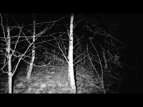 WITCHES IN THE WOODS | LIVE GHOST HUNT | WOMBWELL