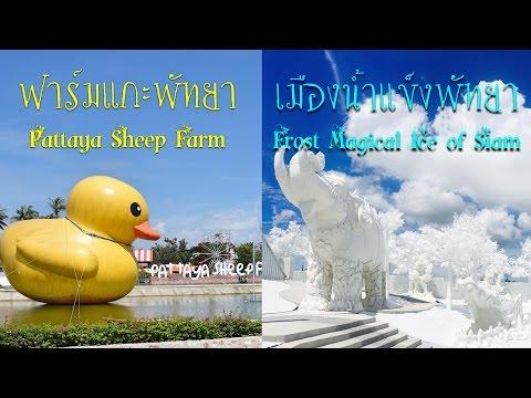 เที่ยวฟาร์มแกะพัทยา ( Pattaya Sheep Farm) & เมืองน้ำแข็งพัทยา (FROST Magical Ice Of Siam  Pattaya)