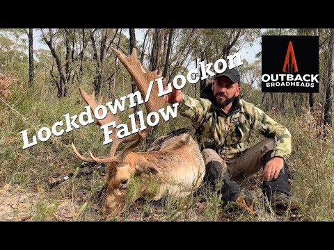 Bowhunting Fallow Deer - Lockdown / Lockon Fallow