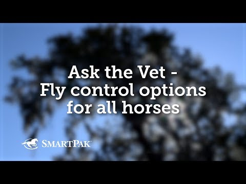 Ask the Vet - Fly control options for all horses