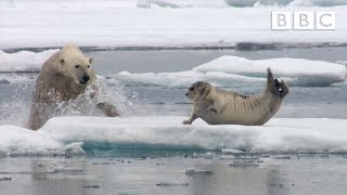 Hungry polar bear surprises a seal - The Hunt: Episode 2 Preview - BBC One thumbnail