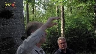 Toter Baum soll auf Waldsterben aufmerksam machen