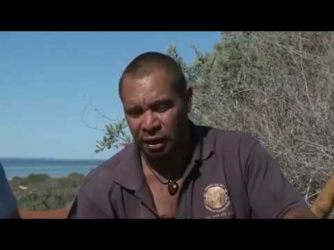 Aboriginal method of cooking mullet: Food native to Australia
