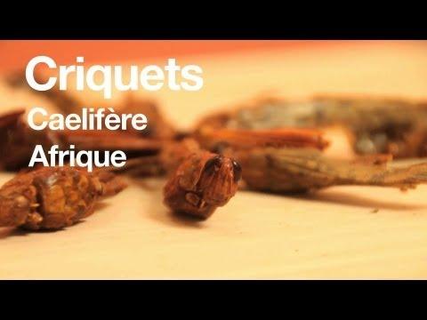 Criquets : t'as déjà goûté ?