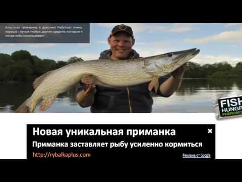 Отзыв FishHungry
