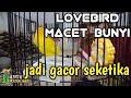 Lovebird Macet Bunyi Gacor Seketika Suara Pancingan Dan Pemasteran Lovebird Jadi Cepet Gacor  Mp3 - Mp4 Download