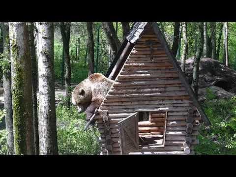 Медведь и крыша дома. Прежде чем сделать новую крышу - надо старую убрать.