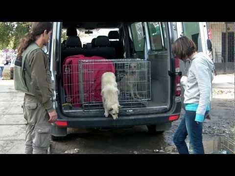 Работа международных волонтёров в Николаеве 001