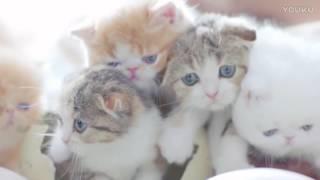 猫が卵から産まれてきただとぅ?かわいすぎる子猫の孵化シーンが今ここに