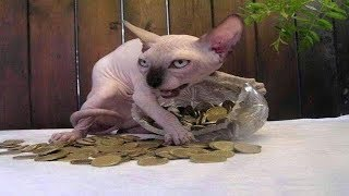 [CATS STEAL 2019] Funny and Cute cats Videos Compilation 2019 - Try Not To Laugh 2019