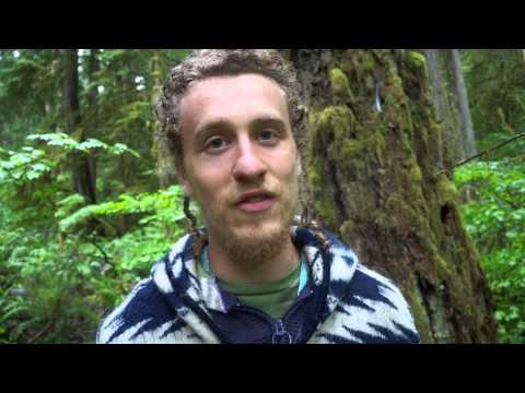 Permaculture, Holism and Reductionism