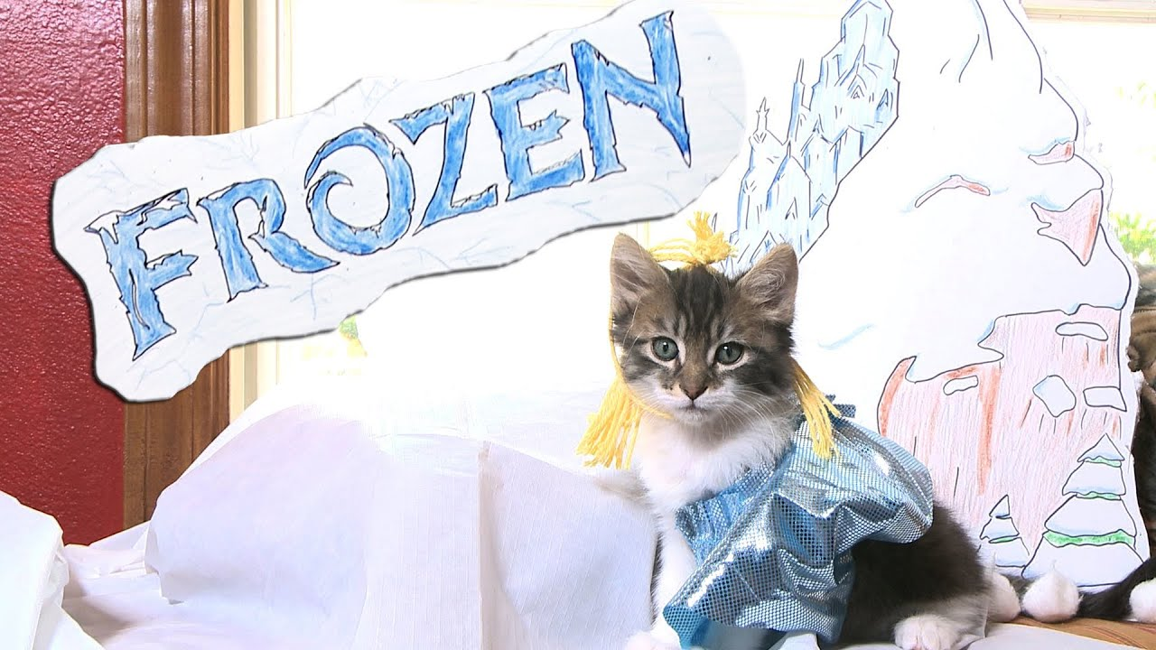 Cute Dog Memes Wallpaper Disney S Frozen Cute Kitten Version Youtube