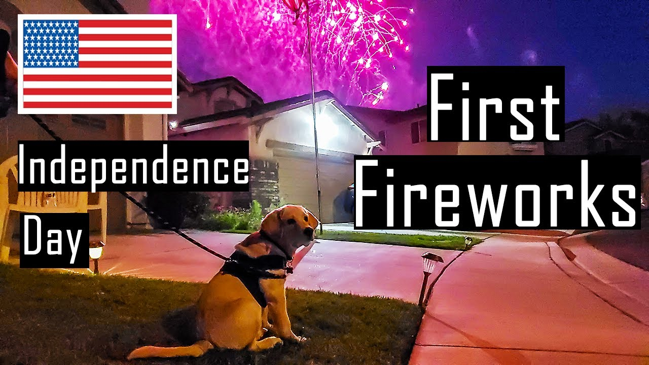Buddy Enjoying his First Fireworks on America's Independence Day | Hindi with English Subtitles