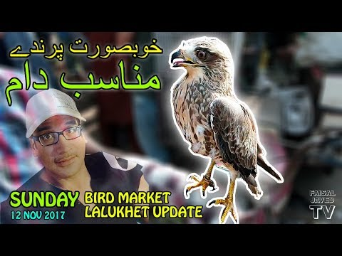 Beautiful Birds – Reasonable Prices | Sunday Bird Market Lalukhet Karachi | Video in URDU/HINDI